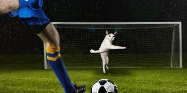 Кот на футбольных воротах